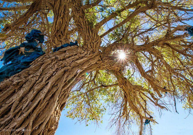 Монголия Священное деревоphoto preview