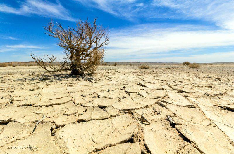 Монголия, пейзаж, засуха Жажда жизниphoto preview