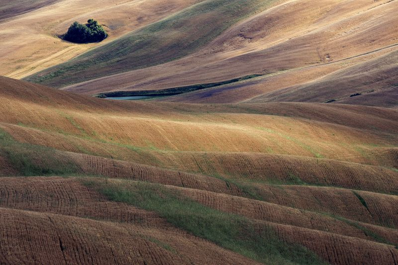 tuscany, landscape, nature Golden furrowsphoto preview