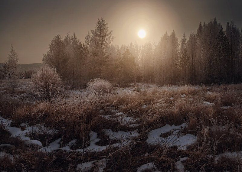 зима, лес, деревья, солнце, трава, свет, мороз, снег, иней Заманчивый лесphoto preview