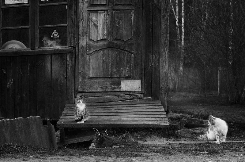 Дом, Кошки, Собака \