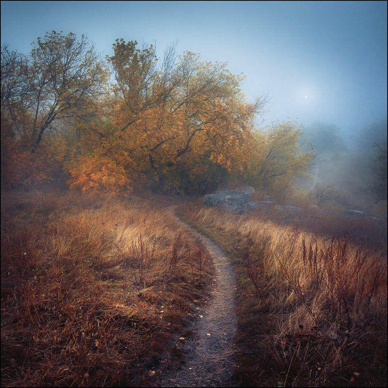 Осень, Туман Тропа к солнцуphoto preview