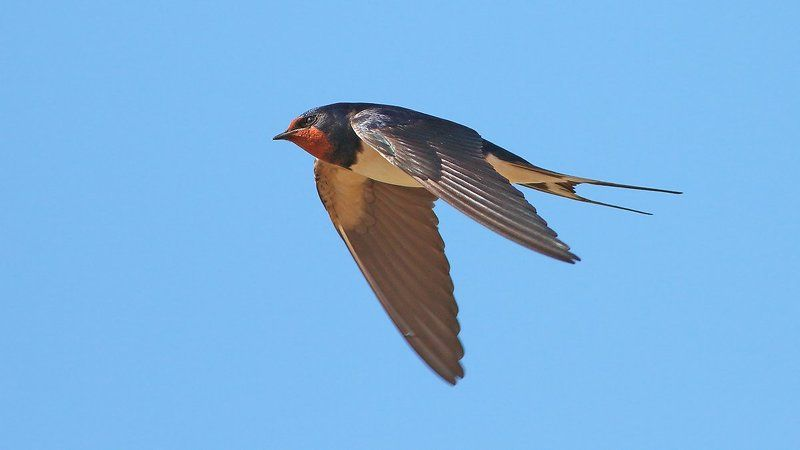 400mm, 7d, animals, birds, swallow, животные, ласточка, птицы Ласточкаphoto preview