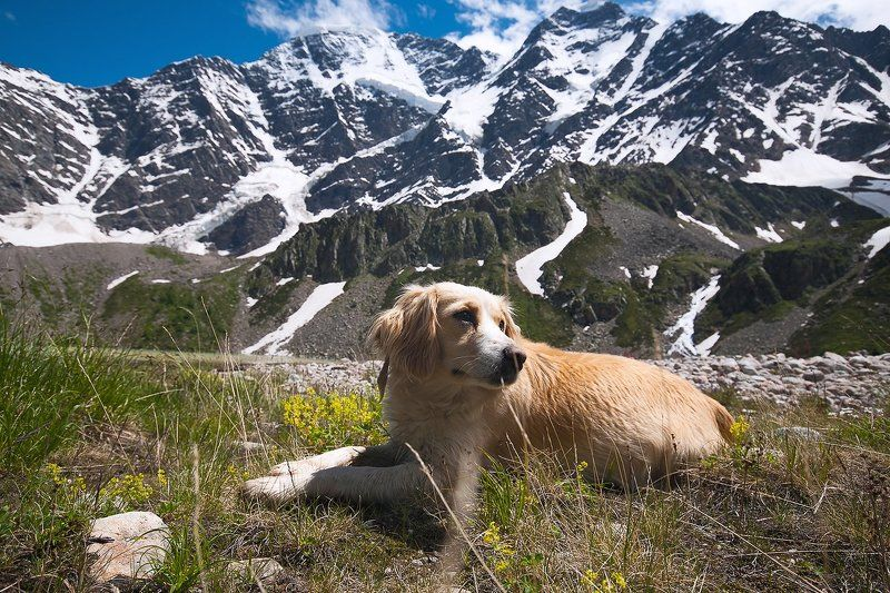 Вершина, Горы, Донгуз орун, Природа, Собака photo preview