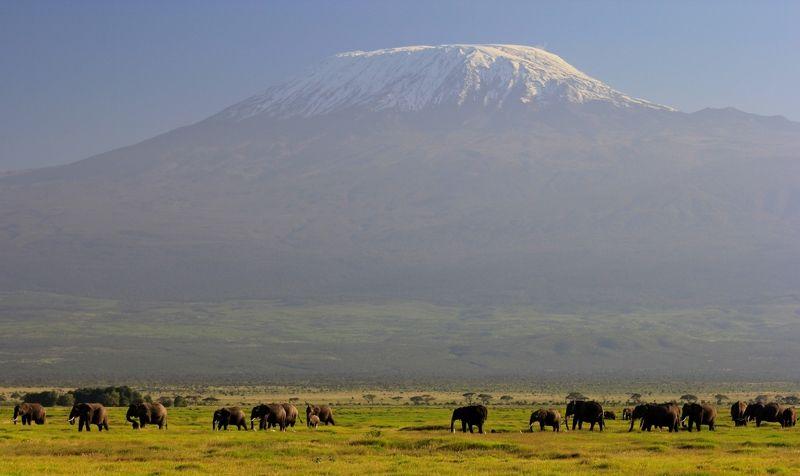 гора, слоны, природа, африка Килиманджаро.photo preview