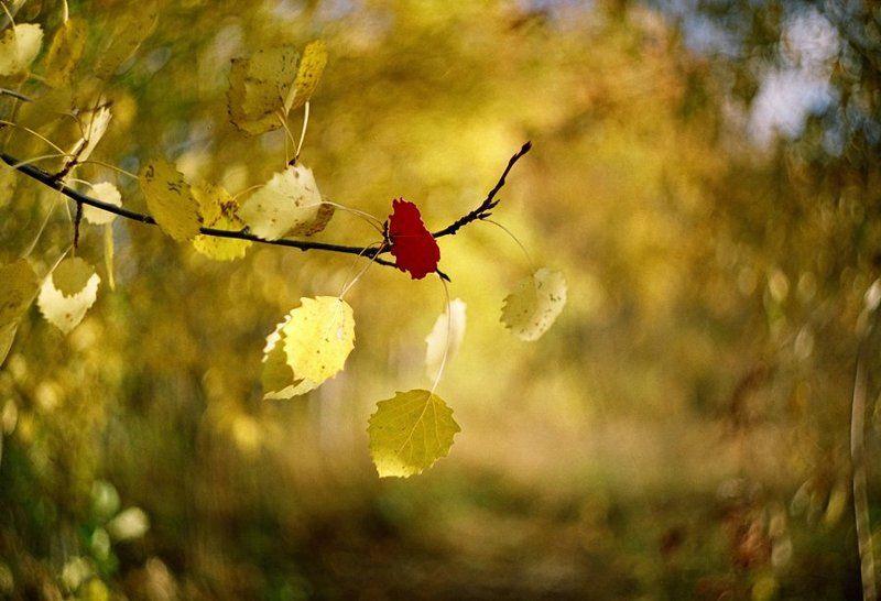 Осенний ветерокphoto preview
