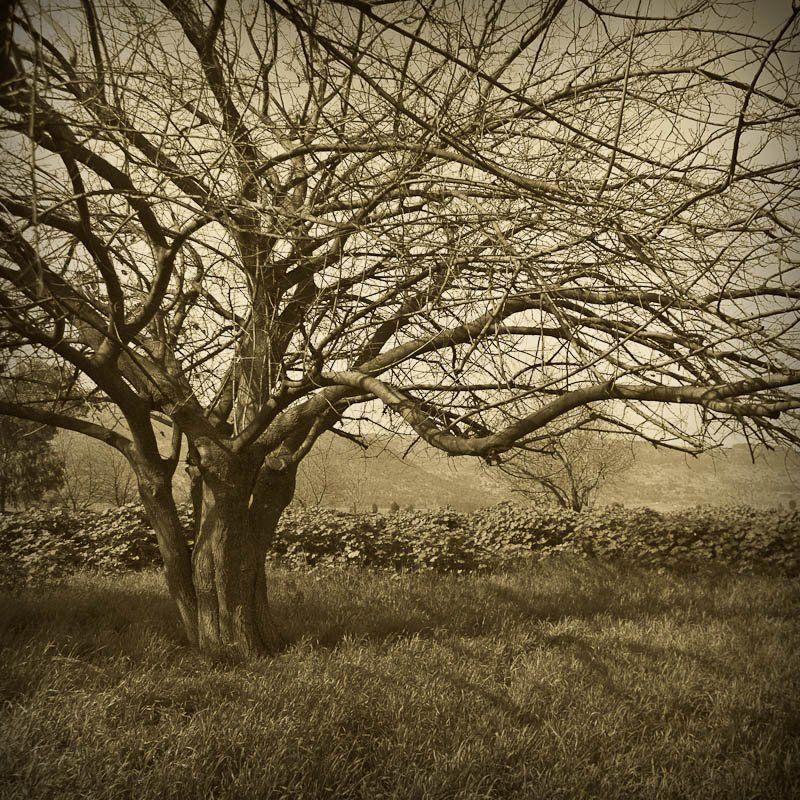 дерево Деревоphoto preview