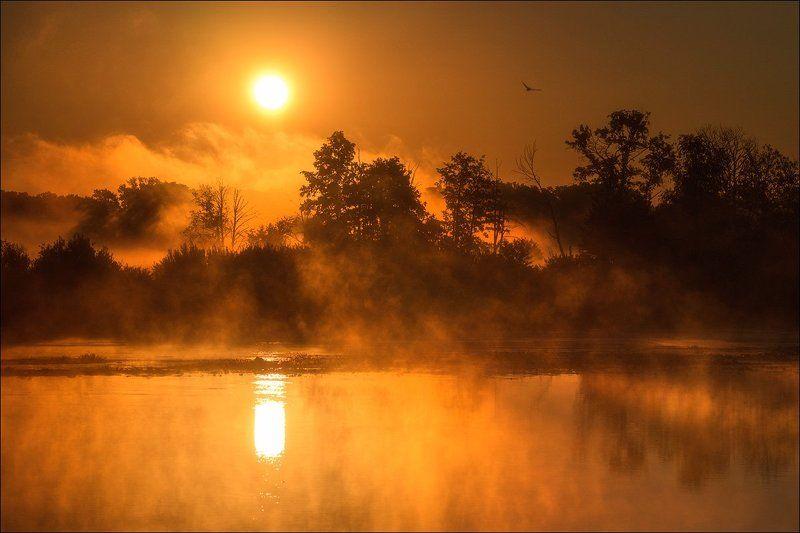 Рассвет, Туман, Утро Утро.photo preview