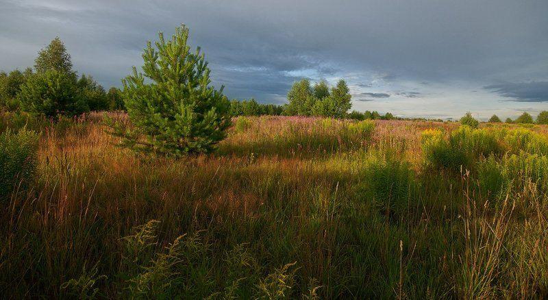 Вечер, Июль, Лес, Лето, Пейзаж, Природа, Трава В июльских травах заблудился...photo preview