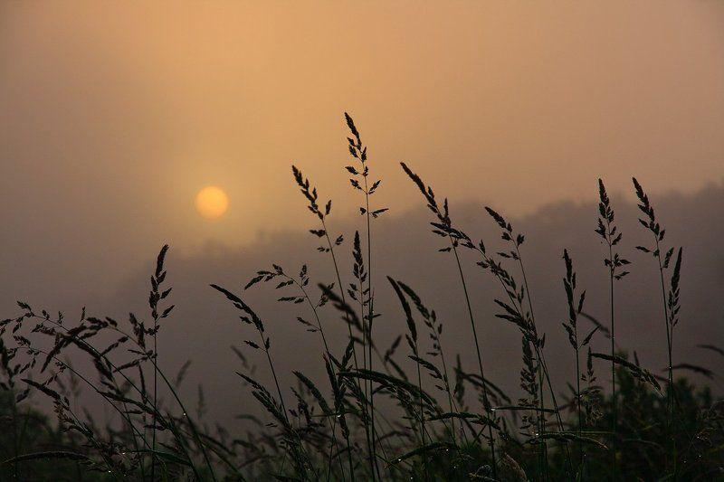 утро, рассвет, солнце, туман, река, Волга Утреннее..photo preview
