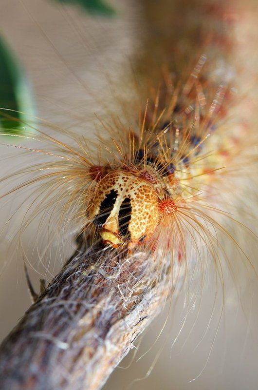macro. close-up, nature Мохнатое макроphoto preview