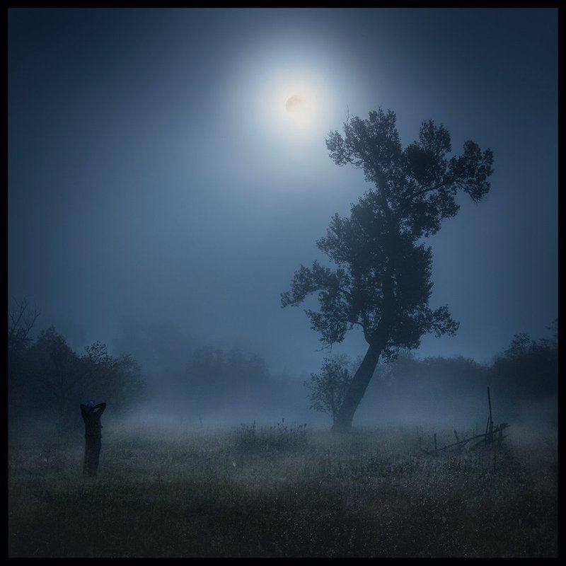 Дерево, Луна, Туман Лунофобияphoto preview