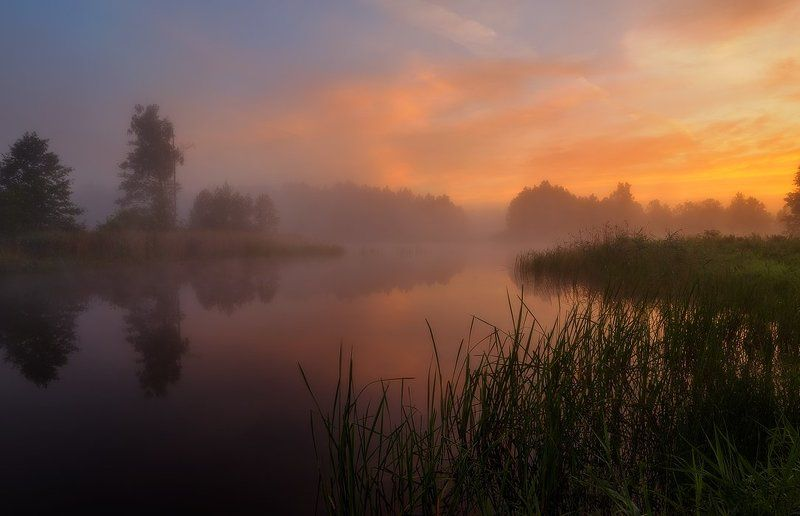 Clouds, Colors, Dawn, Fog, Forest, Lake, Mist, Summer, Sunrise, Trees Sweet summer dreamsphoto preview