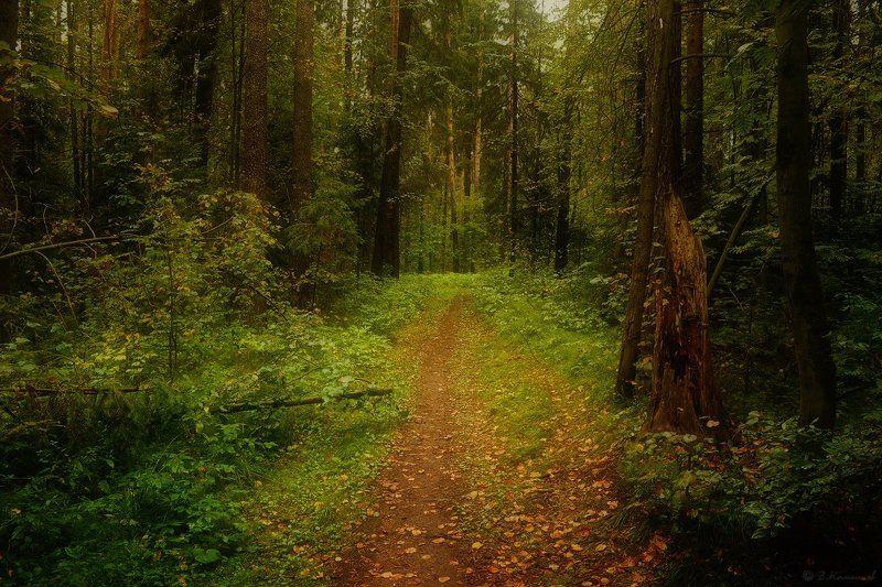 Лес, Лето, Природа, Тропа Там на неведомых дорожках...photo preview