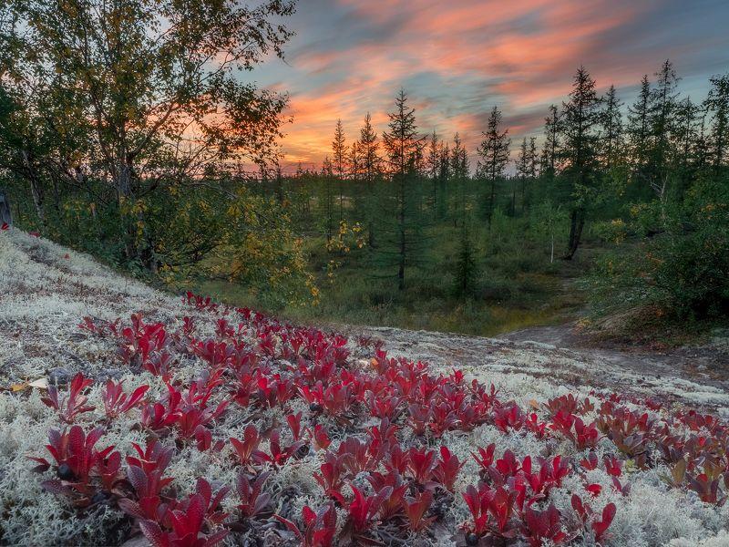 ямал,  пейзаж, тундра, россия,новыйуренгой, уренгой Провожая лето, встречая осень. фото превью