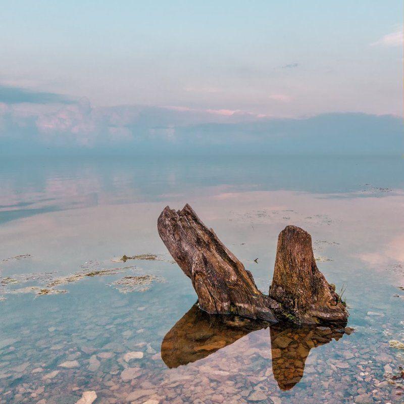 коряга озеро закат ***photo preview
