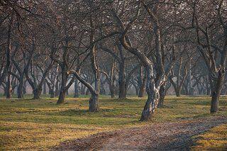 Весеннее утро в яблоневом саду