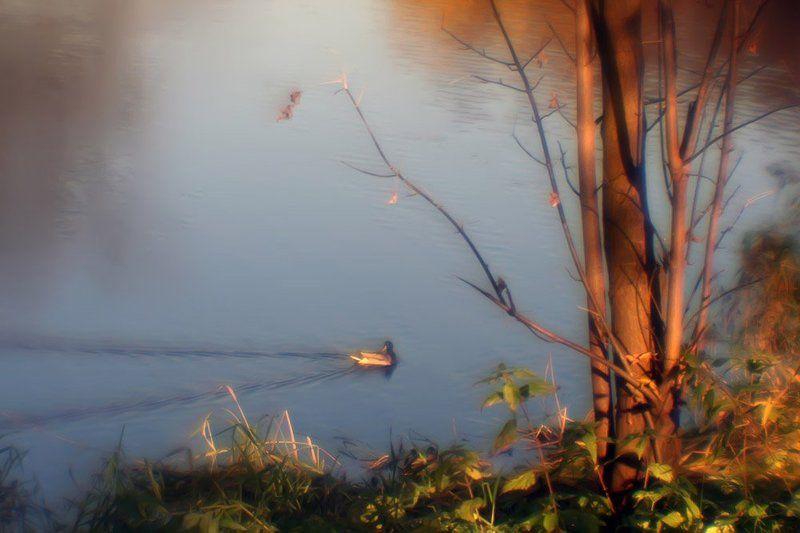 монокль, осень, пруд, уточка Осенняя в золоте фото-раскраска... Про серую уточку добрая сказка...photo preview