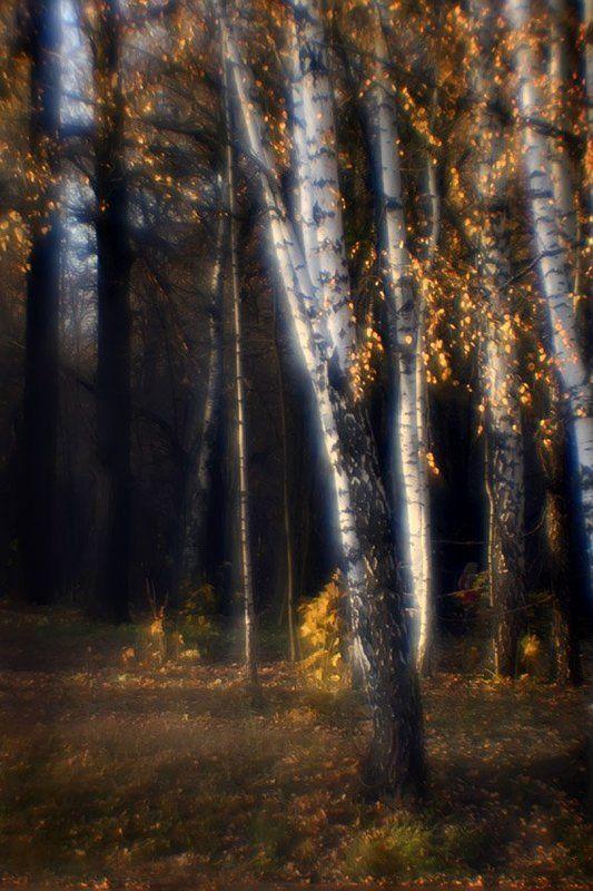 монокль, берёзки, осень Осень по лесу гуляла.. И березкам украшала Косы золотом умело.. И о чем то тихо пела...photo preview