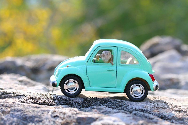 chameleon,cute,nature,holiday,car,animal hi photo preview