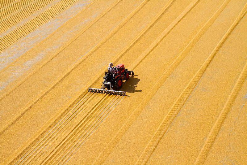 people,travel,farming bulgur kurutmaphoto preview