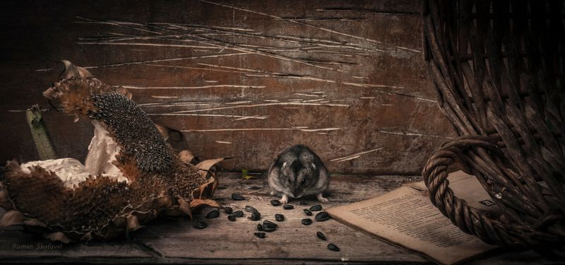 Hamster, Roman Shafoval, Still life, Sunflower Совесть - как хомяк. Или спит или грызет..photo preview