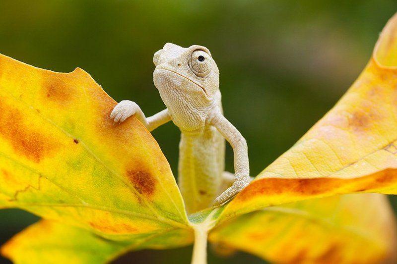 fall,autumn,nature,animal,canon,chameleon hi autumnphoto preview