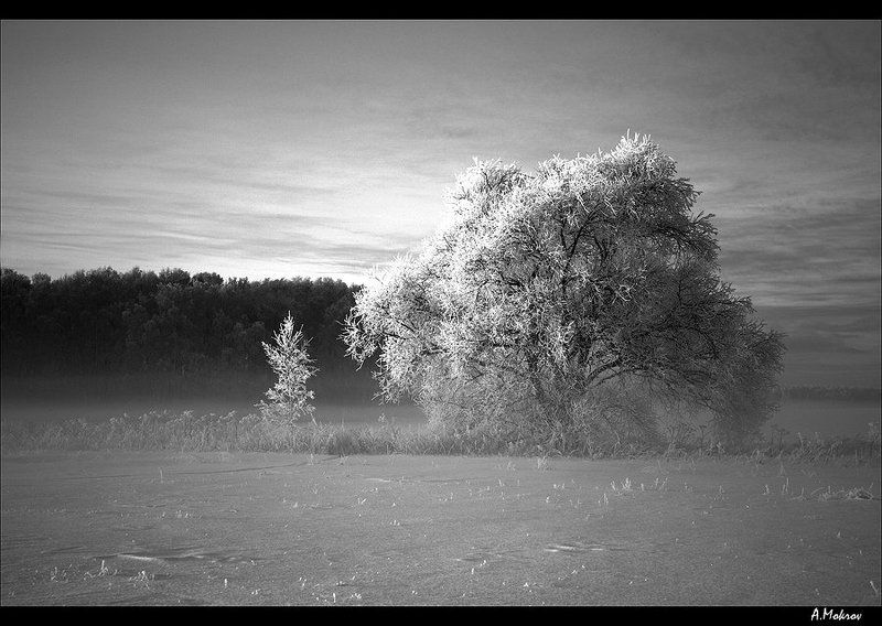 зима, туман, подмосковье И зимой бывает... вишня расцветаетphoto preview