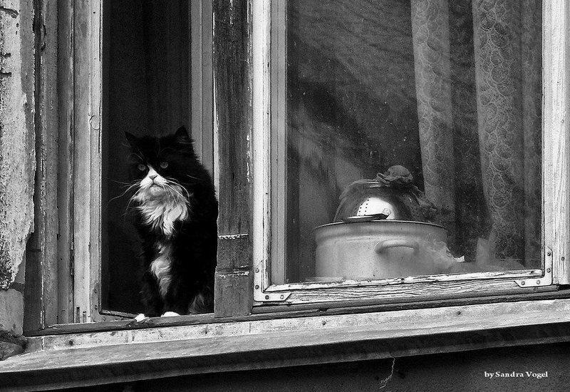 ожидание, гости, кот, окно Ожидая гостейphoto preview