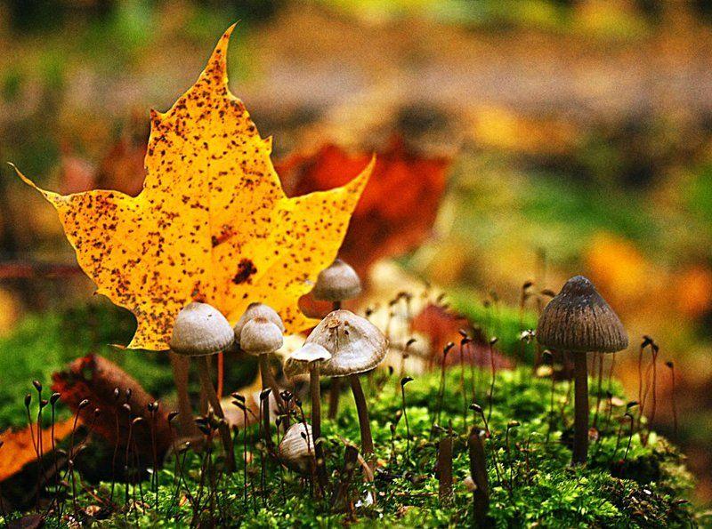 Грибы, Лес, Макро, Макрогрибы, Осень Осенний лесphoto preview