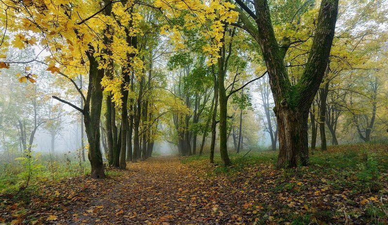 Осенние прогулки (Ускользающая осень)...photo preview