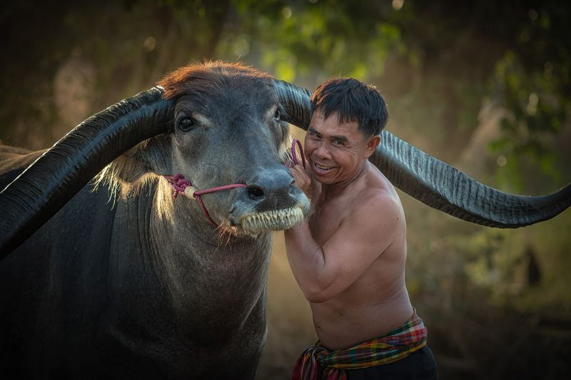 agriculture; animal; asia; asian; beautiful; beauty; buffalo; countryside; couple; culture; cute; face; farm; farmer; farmland; female; field; grass; green; handsome; happiness; happy; laos; leisure; lifestyle; long; love; mammal; meadow; myanmar; nature; Asian farmer with buffalo.photo preview