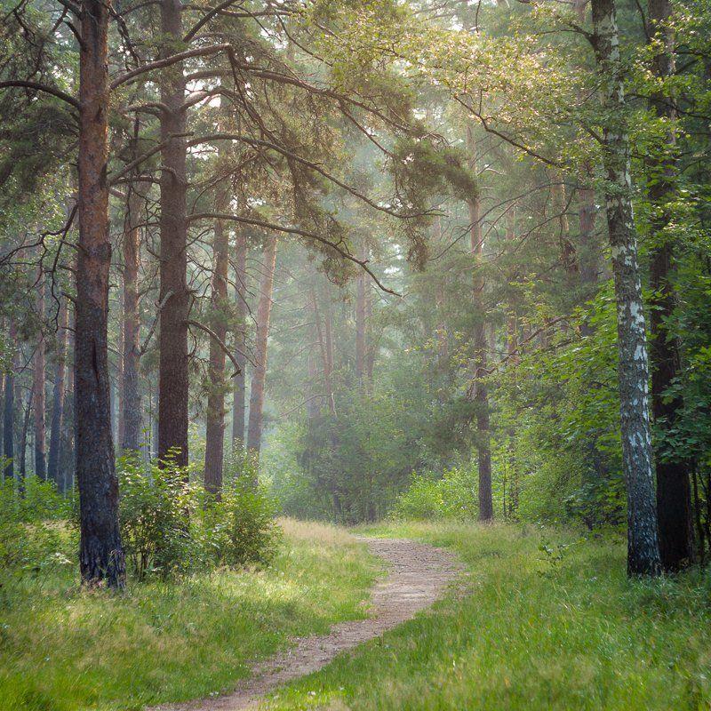 фото, Россия, Дубна, природа, лес, пейзаж, утроо Утренняя тишина.photo preview