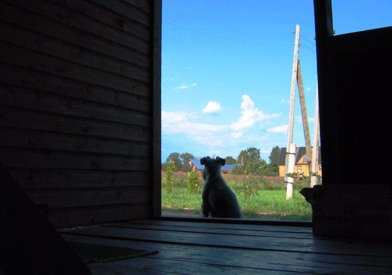 собака, дом, лето Возвращение в летоphoto preview