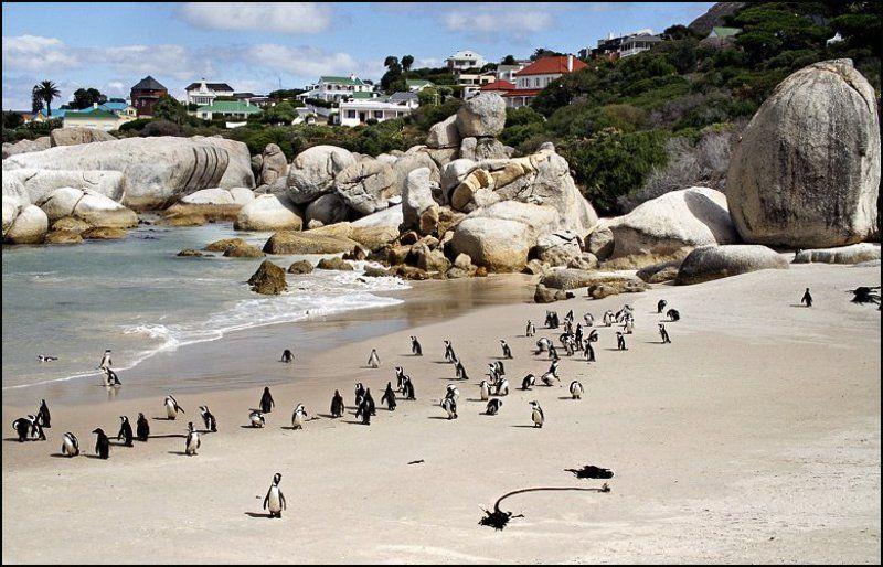 пингвины, океан, кейптаун, африка, пляж Пляж с пингвинамиphoto preview