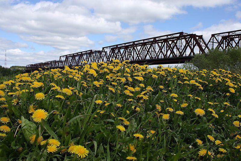 мост река одуванчики лето Летние зарисовкиphoto preview