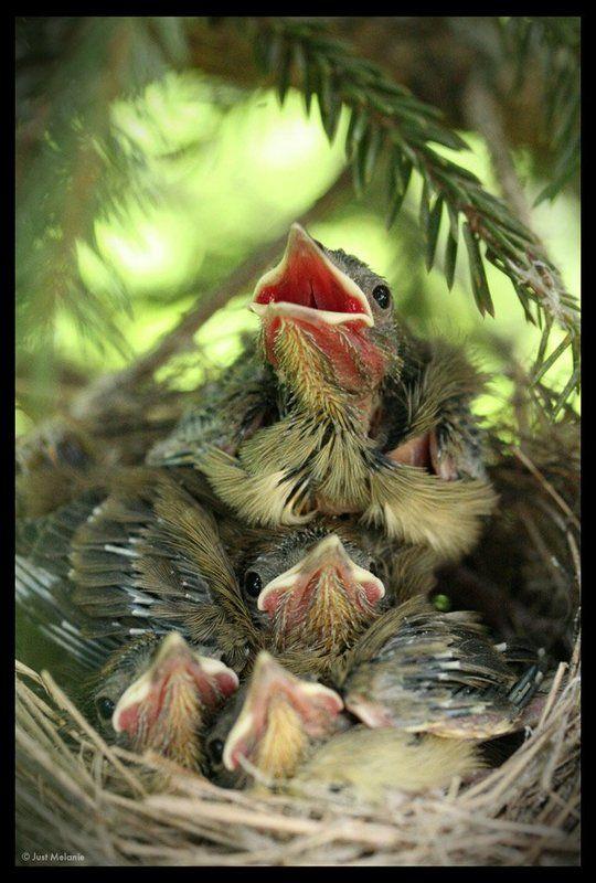 гнездо,птенцы,птицы гнездоphoto preview