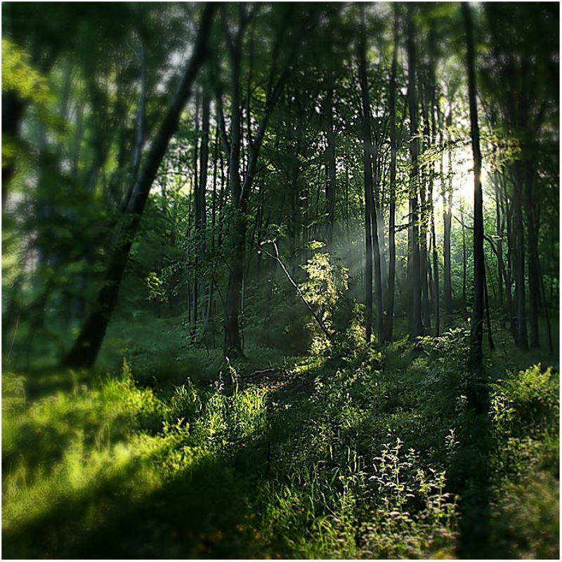 про обыкновенный лес,который мечтает стать сказочным...photo preview