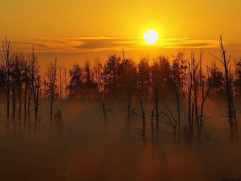 рассвет курган туман лес Рассветнаяphoto preview