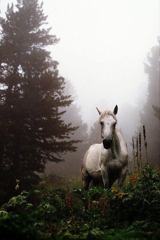 конь лошадь туман ёжик алтай Ёжик, ты?photo preview