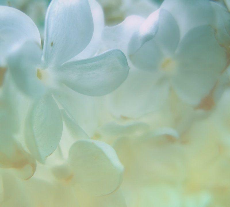 ......вдыхая аромат весны.....photo preview