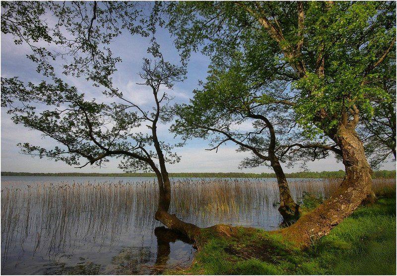 озеро, деревья ***photo preview