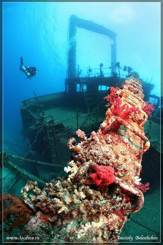 wreck, giannis, d, shaab, abu, nuhas, side, mount, seacam *Giannis D* или *Как умирают корабли*photo preview