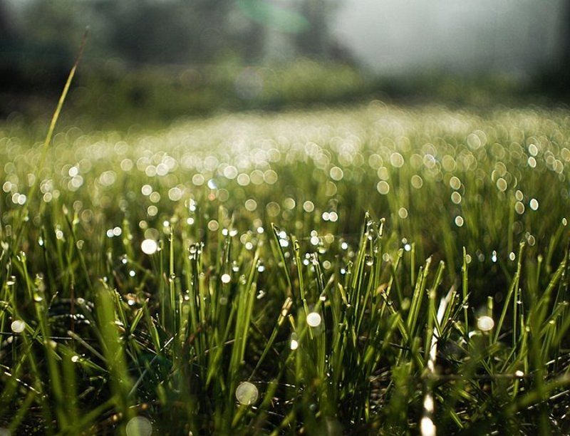 утро, трава, бокэ, ***photo preview