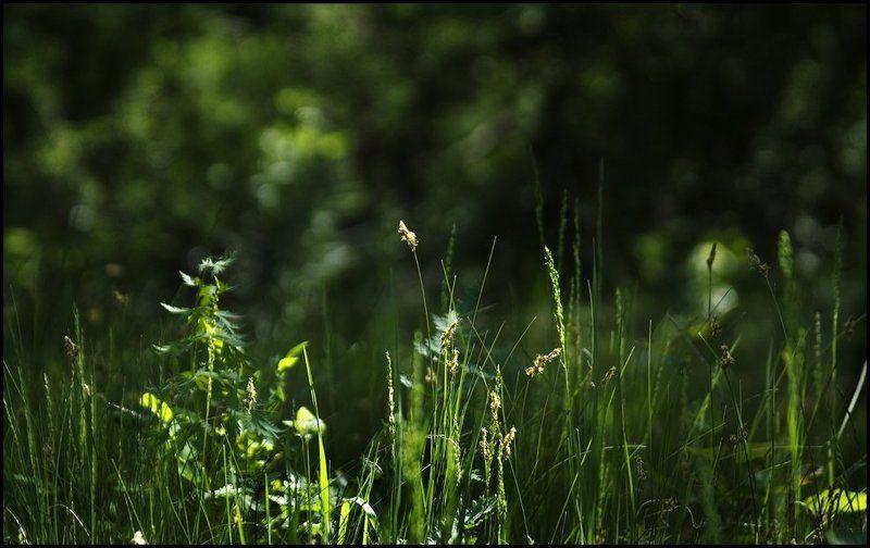 лето, трава, утро Летоphoto preview