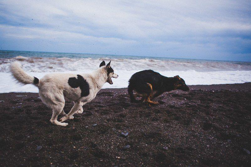 Любить у моряphoto preview
