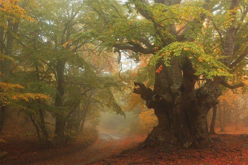 крым, демерджи, туман осень ***photo preview