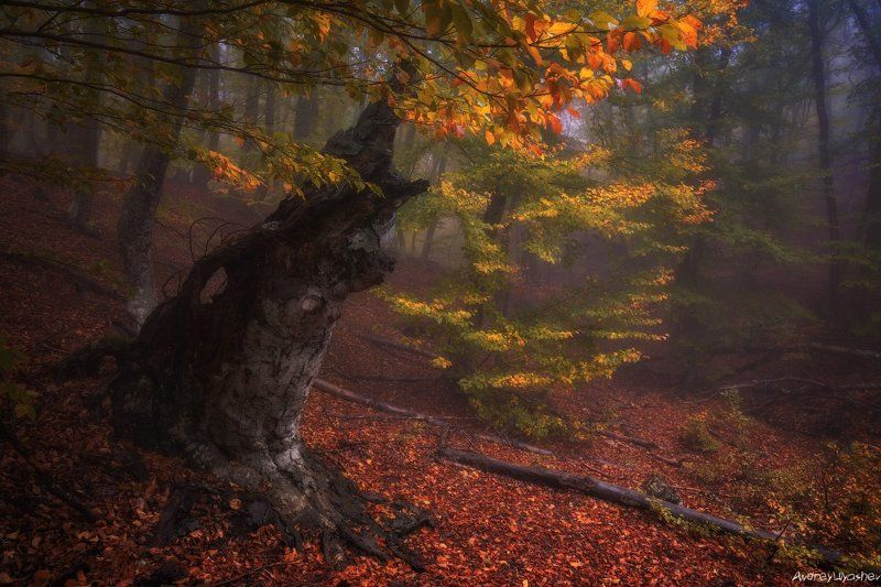 крым, демерджи, осень, лес, туман В лесной глубинеphoto preview