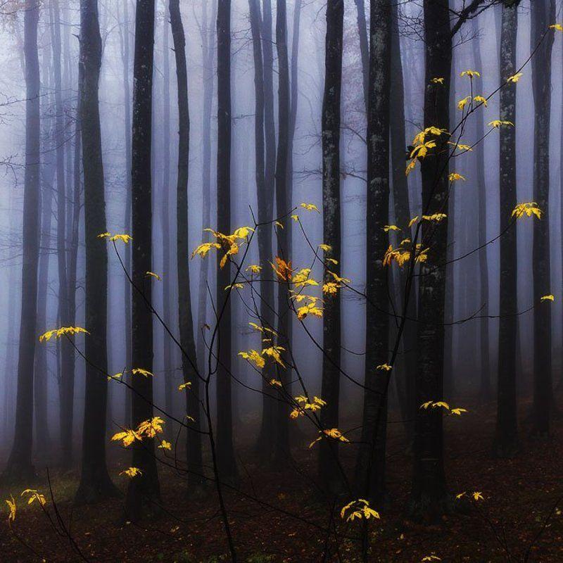 Танец золотой осени туман развеселилаphoto preview