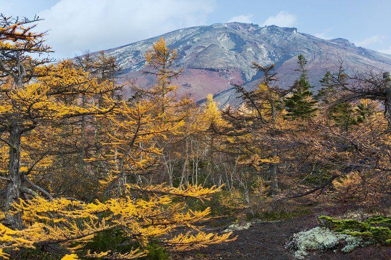 япония, осень, фудзи, фудзияма, вулкан Фудзияма в осеннем обрамленииphoto preview